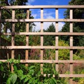 Fixing trellis fencing by handyman